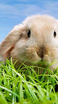 Bunny, Animal, Fluffy, Cute