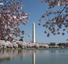 I love Washington, DC in the spring!