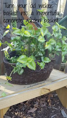 Turn Your Wicker Basket Into a Concrete Planter