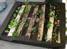 Pallet garden on the ground laying flat
