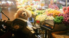 little dog, night, Hat Yai, street, trip, travel, thailand, place, photo, people. land. feel, view, day, asia, awesome, life, best, new, таиланд, путешествия, места, world, люди, улицы, город, азия, впечатления