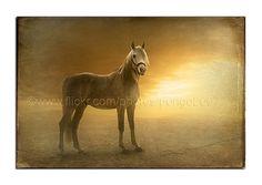 Desert Horse - http://www.1pic4u.com/blog/2014/09/04/desert-horse/
