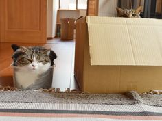 Maru in the little box and hana in the big one.