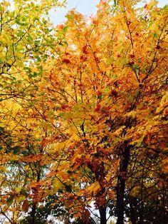 Осень в Рязани
