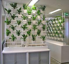 Plants On Walls Vertical Gardens Florafelt Vertical Planters are