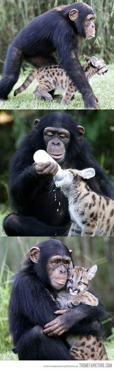 Humans should learn from animals…love that they are blind to differences!