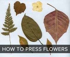 How to press leaves and flowers