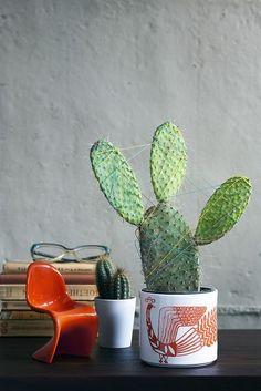 """Cactus Love"" by gozdeker"