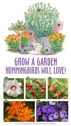 Grow a garden hummingbirds love - Garden design layout - Blumen Beautiful Flowers Garden, Love Garden, Garden Care, Love Flowers, Flowers For Full Sun, Flowers For Garden, Flowers For Butterflies, Full Sun Garden, Butterfly Garden Plants
