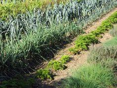 Ce tableau donné à titre indicatif présente les périodes de semis, de repiquage et de récolte pour les principaux légumes et pour un climat moyen (type...