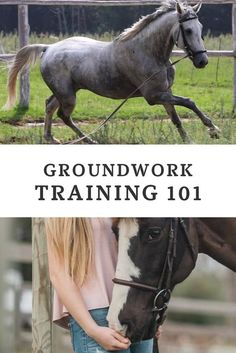 Training 101 Ready to master groundwork with your horse? Here's our complete guide to the basics of groundwork training!Ready to master groundwork with your horse? Here's our complete guide to the basics of groundwork training! Horseback Riding Tips, Horse Riding Tips, Ground Work For Horses, Horse Behavior, Horse Exercises, Training Exercises, Horse Care Tips, Horse Facts, Horse Training