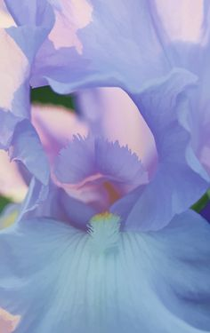 ☀iris~Centered in Simple Things by Synapped Periwinkle Color, Color Azul, Lavender Blue, Lilac, Pink Purple, Purple Haze, Mauve, Aqua, Iris Flowers