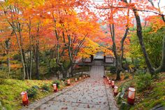 京都 小倉山 常寂光寺。ライトアップの装置。