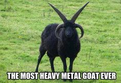Found the model for many black metal bands!