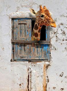 Giraffe. ❣Julianne McPeters❣ no pin limits