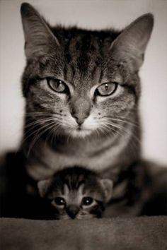 mommi and babi kitty