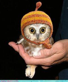 baby chi o, very cute. love my owls.
