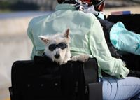Taking Your Pet on the Road (motorcycle travel) Motorcycle Travel, Pet Travel, Yahoo Images, Trip Planning, Your Pet, Image Search, Pup, Dogs, Biker