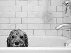 Dog in bath