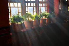 Learn All About Indoor Gardening and how to garden indoors with Southern Garden Girls! We garden Organically Indoors or outdoors! Growing Vegetables Indoors, Herbs Indoors, Container Gardening, Gardening Tips, Indoor Gardening, Indoor Herbs, Low Maintenance Indoor Plants, Pots, Smart Garden