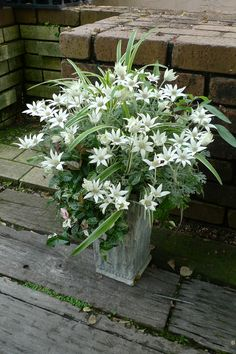 Looks like spider plant, rue, and no idea what the gorgeous white flower is
