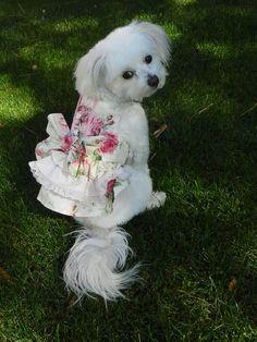 Zoe's Easter dress glam shot