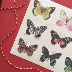 Butterfly sticker sheet | Etsy  #stickers #stickersheets #sticker #etsy #etsyshop #butterfly #butterflies #illustration #stationery Vinyl Paper, Butterfly Painting, Plant Illustration, Stationery, Hand Painted, Colours, Etsy Shop, Illustrations, Stickers