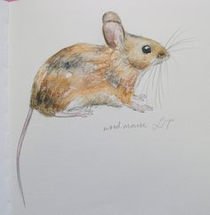 Woodmouse by Lisa Toppin.