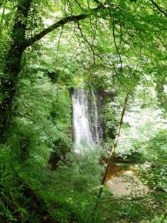 Falling Foss Waterfall, near Whitby, Yorkshire