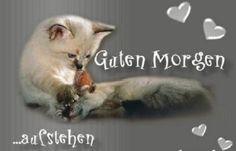 guten_morgen_sprueche_fuer_whatsapp_status