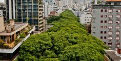 Porto Alegre, the capital city of the Brazilian state of Rio Grande do Sul is being called 'the most beautiful street in the world'. Why? Take a look at these photos and see for yourself. Each side of the street is lined with trees, with some as tall as the 7th floors in adjacent buildings. […]