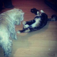 Cat&dog ;)