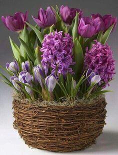 Bulb Flowers, Love Flowers, Fresh Flowers, Spring Flowers, Flower Pots, Beautiful Flowers, Garden Bulbs, Garden Pots, Plum Garden