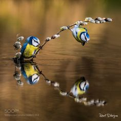 Lesson of balance 2 by tenchinage. Please Like http://fb.me/go4photos and Follow…