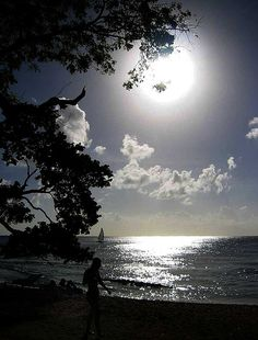Moonlight - Barbados Beach, The Caribbean