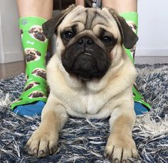 a3e90752e83 8 Great Custom Dog Socks images