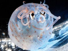 The piglet squid would seem to suggest that evolution's medications are working. Possibly a little too well.