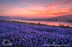 Multicolor Meadow - Texas Wildflowers by Gary Regner