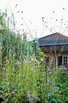 I haven hos Evigglade ♥: På en regnfuld og overskyet dag