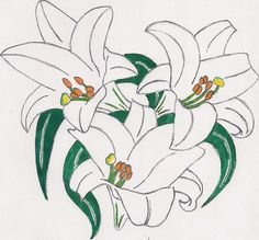 An Easter Lily--Grandma Alberta Easter Lily Flower, Lily Flower Tattoos, Butterfly Species, Peace Lily, Pacific Coast, Lilies, Watercolor Flowers, Tattoo Inspiration, Rooster