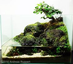 Nice 100 Aquascape Ideas https://meowlogy.com/2017/03/27/100-aquascape-ideas/ For a diverse and more successful aquarium, various different kinds of plants ought to be used. Inside this case always elect for plastic plants or you could say artificial plants that are available in a range to pick from. For this reason, you need to put them under plants that are taller. In case you are growing high maintenance plants you might want to think about an aquatic soil or clay.