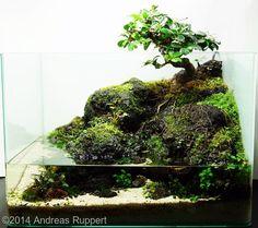 #paludarium #パルダリウム #盆栽 #bonsai-art (Via:Entry #147: 35L Paludarium: Calm Carmona) カエルが喜びそうなパルダリウムですね。(^^) パルダリウムにK砂をどうぞ!