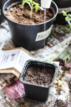 Tomaatin kasvatus - siementen kylvö | Kokit ja Potit -ruokablogi Green, Desserts, Flower, Food, Healthy, Tailgate Desserts, Deserts, Eten, Postres