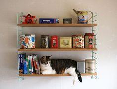 * wunderkammer *: El objeto de la semana: Sistema de biblioteca String / Das Objekt der Woche: String Bücherregalsystem / The object of the ...