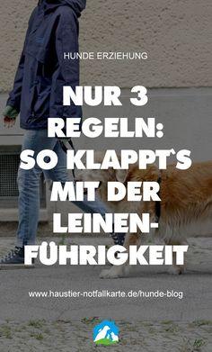Nur 3 Regeln: so klappt es mit der Leinenführigkeit! Jetzt im Haustier Notfallkarte Hunde Blog! #hunde #welpen