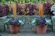 Fall Planters with Kale by Deborah Silver Fall Planters with Kale by Deborah Silver Fall Containers, Succulents In Containers, Container Flowers, Container Plants, Fall Planters, Garden Planters, Flowering Kale, Fall Window Boxes, Gemüseanbau In Kübeln