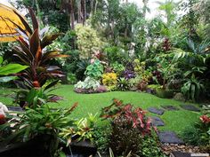 Dennis Hundscheidt's tropical garden, Queensland … great! – Dennis Hundscheidt's tropical garden, Queensland … great! Small Tropical Gardens, Tropical Garden Design, Tropical Backyard, Backyard Garden Design, Tropical Plants, Bali Garden, Balinese Garden, Diy Garden, Garden Care