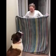 Top Funny Videos - Can't Stop Laughing Top Funny Videos, Funny Prank Videos, Funny Animal Videos, Funny Animals, Funny Laugh, Stupid Funny, Funny Cute, Funny Relatable Memes, Funny Jokes