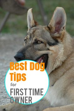 Have A Happy, Healthy and balanced Dog With These Tips. * Read more info by clicking the link on the image. Dog Care Tips, Pet Care, Small Puppies, Dogs And Puppies, Dog Spay, Dog Milk, Dog Training Tips, Happy Dogs, Best Dogs