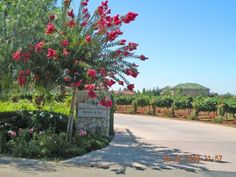South Coast Winery, Temecula, California
